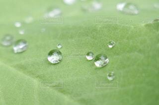 マクロで撮った葉っぱの上の水滴の写真・画像素材[4595294]