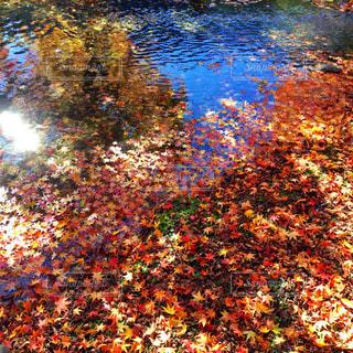 川のぼやけた画像 - No.876011
