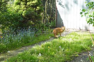 路地裏での新緑とポーランド猫の写真・画像素材[4424104]