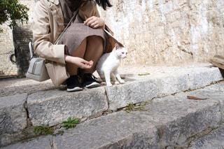 階段の上で猫と戯れる女性の写真・画像素材[4431512]