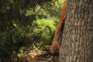 木を歩くリスの写真・画像素材[4431566]