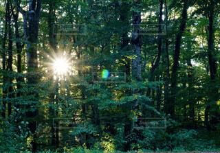 森の中の光の写真・画像素材[4431667]