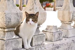 石造りの塀と野良猫の写真・画像素材[4432473]