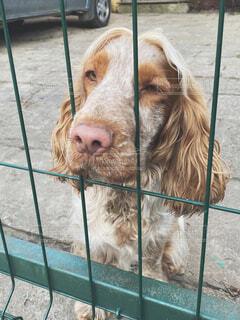 ポーランドのおしゃれな犬の写真・画像素材[4440042]