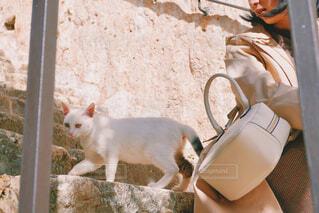 階段にいる猫と女性の写真・画像素材[4440243]