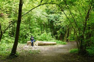 森林の中で本を読む男性の写真・画像素材[4443103]