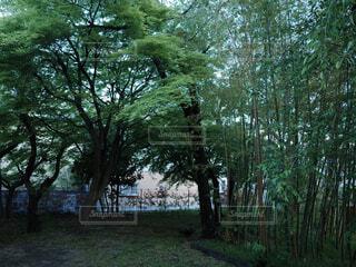 竹林の庭の写真・画像素材[4424012]