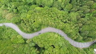 動物,緑,山道,樹木,空撮,草木,スカイライン,ガーデン,フォトジェニック