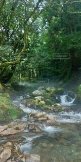 自然,屋外,水面,滝,樹木,草木,フォトジェニック