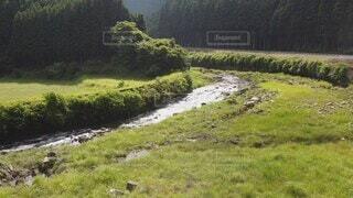 自然,風景,屋外,緑,山,景色,草,樹木,空撮,草木