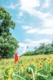 万博記念公演の向日葵の写真・画像素材[4678439]