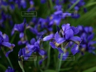 紫色の花で満たされた花瓶の写真・画像素材[4916470]