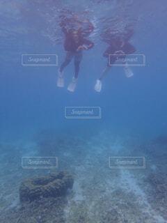ハートのサンゴと一緒に♥️の写真・画像素材[4430456]
