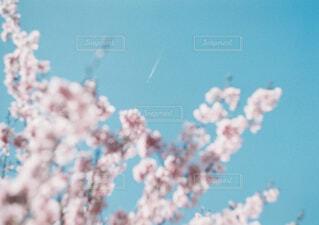 桜と空の写真・画像素材[4431168]