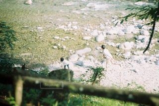 水切りの写真・画像素材[4432709]