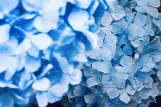花のクローズアップの写真・画像素材[4567845]