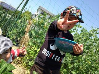 収穫 - No.753113