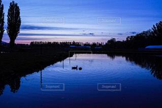 日暮れまで優雅な鴨。広がる波紋。の写真・画像素材[4450862]