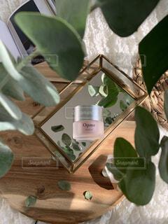 花,屋内,花瓶,観葉植物,草木,アスタリフト,ASTALIFT,オプミー,opme,高保湿持続ジェル