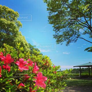 花×青空の写真・画像素材[4438092]