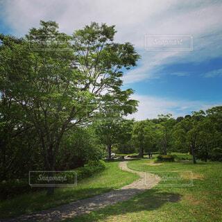 緑豊かな畑の真ん中にある木の写真・画像素材[4438093]
