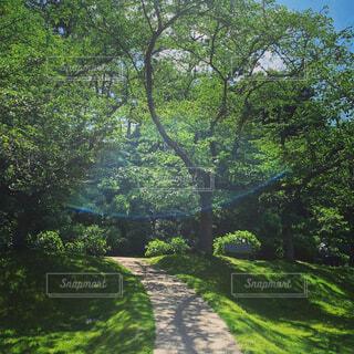 5月の晴天の中 緑に癒やされましたの写真・画像素材[4438102]
