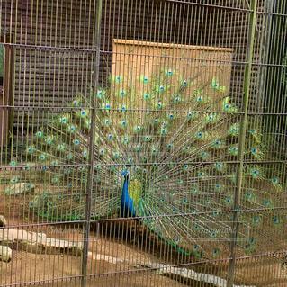 ワイヤーフェンスの上の鳥の写真・画像素材[4438094]
