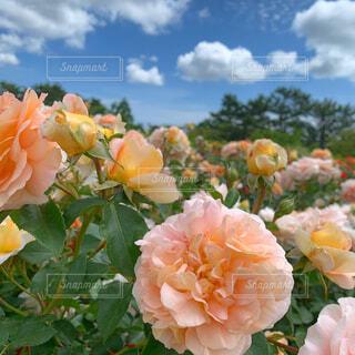 花×青空の写真・画像素材[4438191]