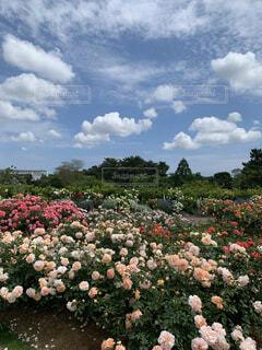 花×青空=癒しの写真・画像素材[4438190]