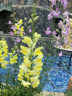 紫色の花で満たされた花瓶の写真・画像素材[4438402]