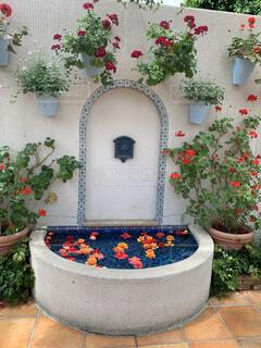 花園のクローズアップの写真・画像素材[4438406]