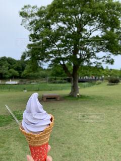 藤の花ソフトの写真・画像素材[4439482]