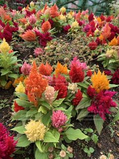 花園のクローズアップの写真・画像素材[4440099]