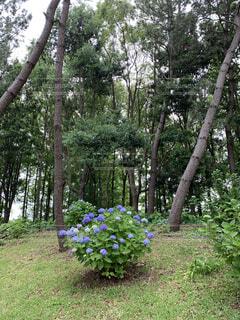 森の中の緑の植物の写真・画像素材[4440102]