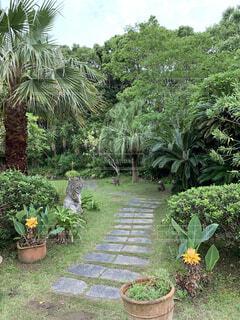 インドネシア風 ガーデンの写真・画像素材[4440107]