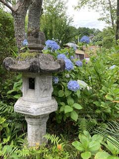花園のクローズアップの写真・画像素材[4556539]