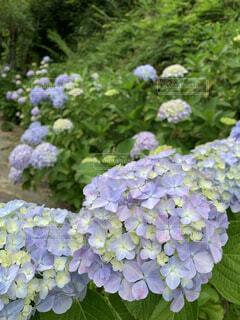 花園のクローズアップの写真・画像素材[4556541]
