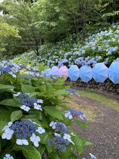 花園のクローズアップの写真・画像素材[4556559]