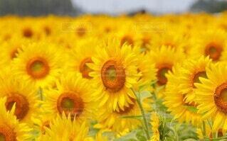 花のクローズアップの写真・画像素材[4658732]