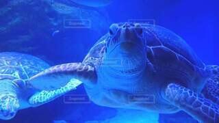 ウミガメの写真・画像素材[4887449]