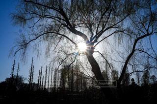 木々の隙間からの光芒の写真・画像素材[4449949]