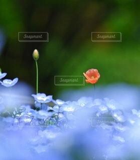 花のクローズアップの写真・画像素材[4462268]