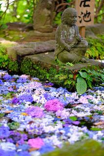 水と紫陽花の癒しの写真・画像素材[4591619]