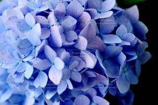 花のクローズアップの写真・画像素材[4562469]