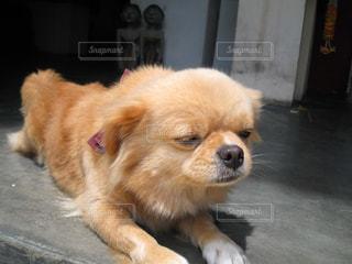 犬 - No.246406