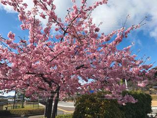 桜の写真・画像素材[3041356]