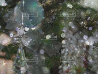 近くの花のアップの写真・画像素材[915601]