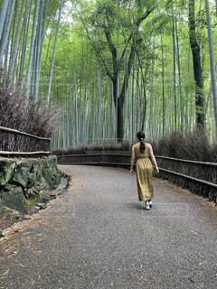竹林と後ろ姿の写真・画像素材[4629466]