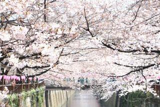 春の写真・画像素材[411467]