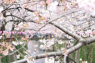 春の写真・画像素材[411472]